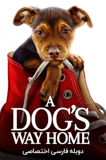 مسیر یک سگ به خانه